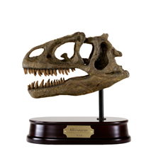 Allosaurus Skull Model