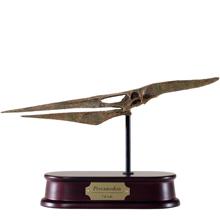 Pteranodon Skull Model