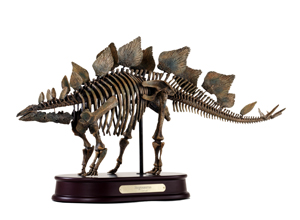 Stegosaurus Skeleton Model