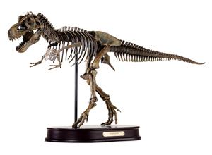 Tyrannosaurus Skeleton Model