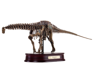 Apatosaurus Skeleton Model