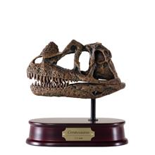 Ceratosaurus Skull Model