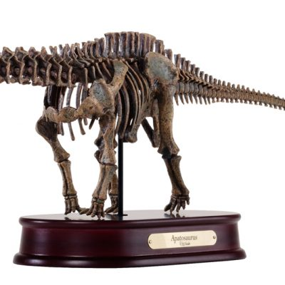 Apatosaurus Skeleton Model