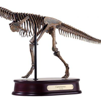 Carnotaurus Skeleton Model