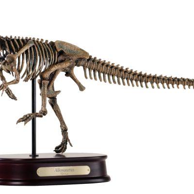 Allosaurus Skeleton Model