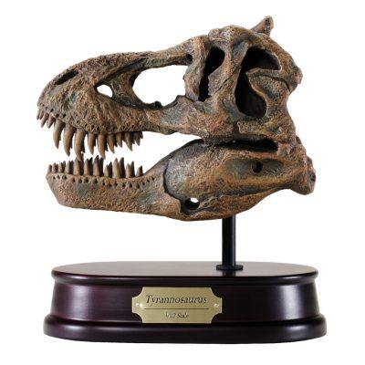 Tyrannosaurus / T.rex Skull Model