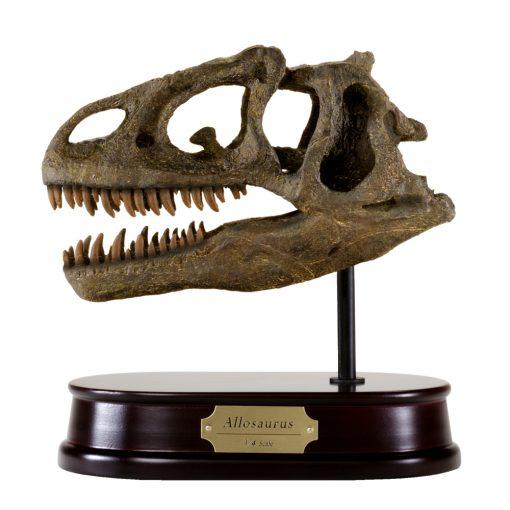 Allosaurus Skull Model