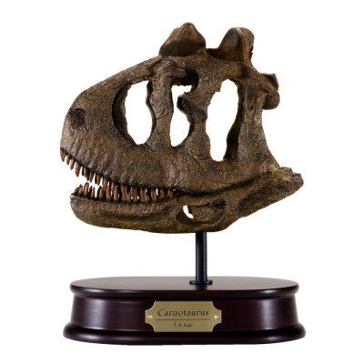 Carnotaurus Skull Model