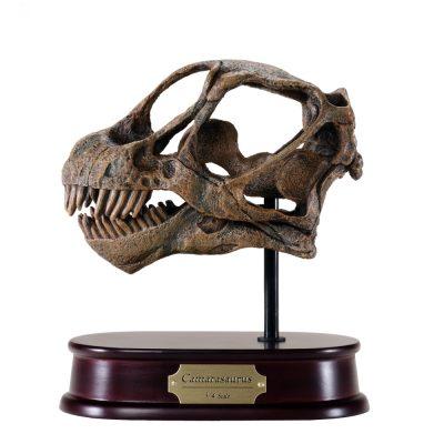 Camarasaurus Skull Model