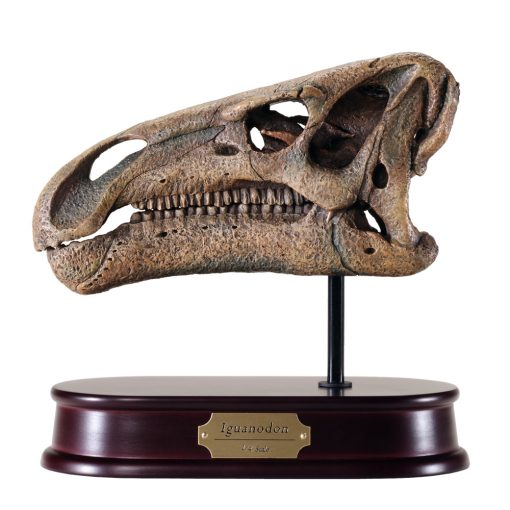 Iguanodon Skull Model