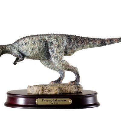 Pachycephalosaurus Finished Model