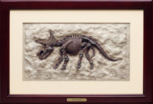 Triceratops 3D Framed Art