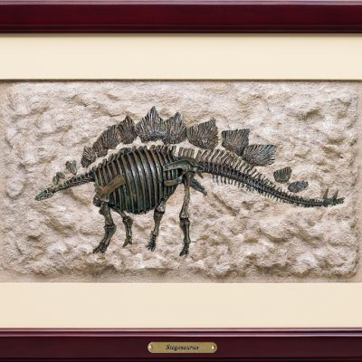 Stegosaurus 3D Framed Art